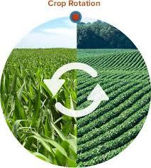 crop-rotation.jpg