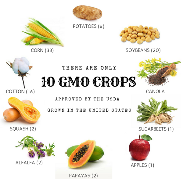 GMO CROPS.png